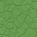 Крокодил зеленый